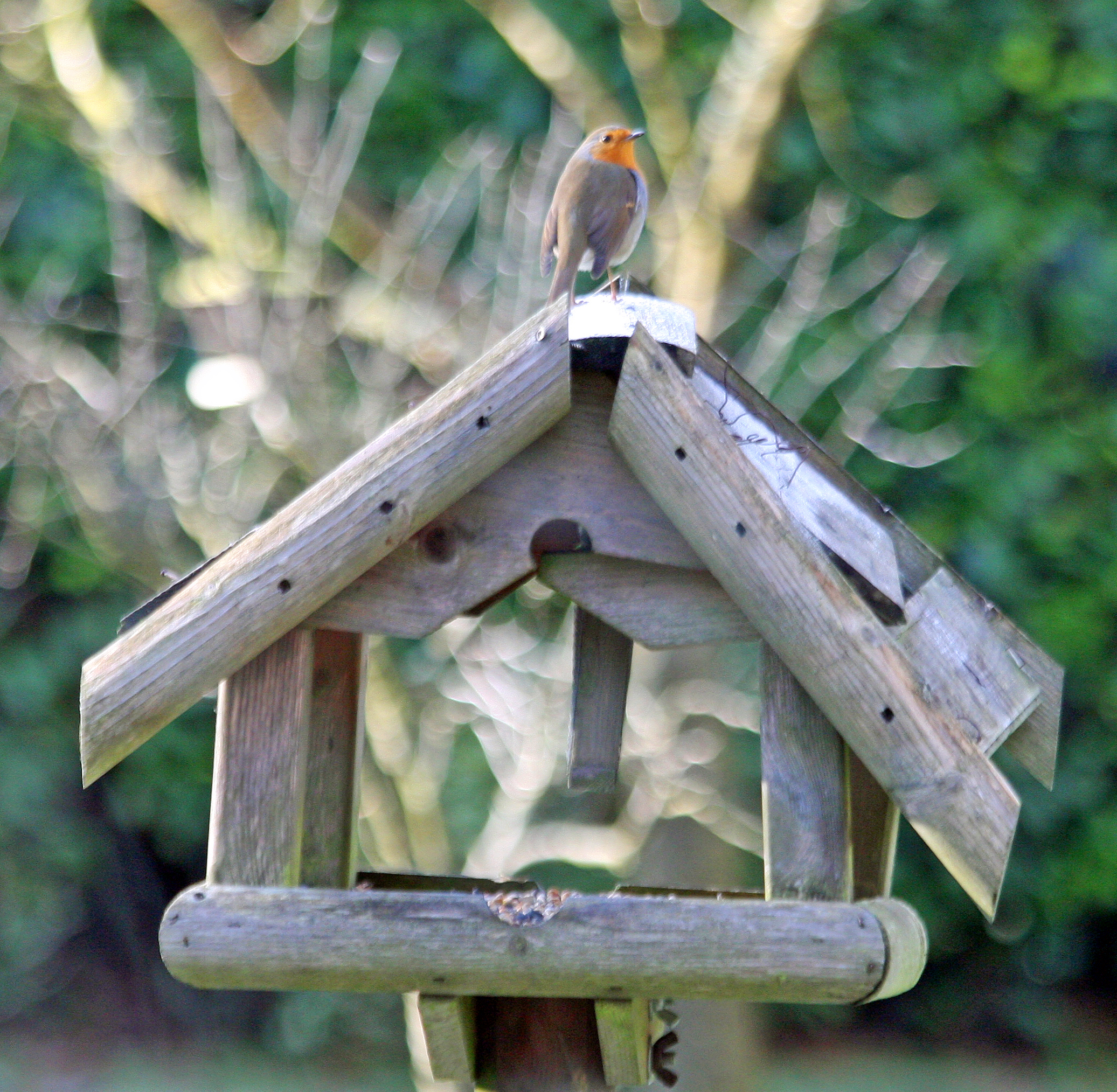 Awesome Robin Bird Houses Plans Free Ideas - Best image 3D home ...