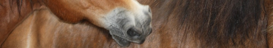 horse head header