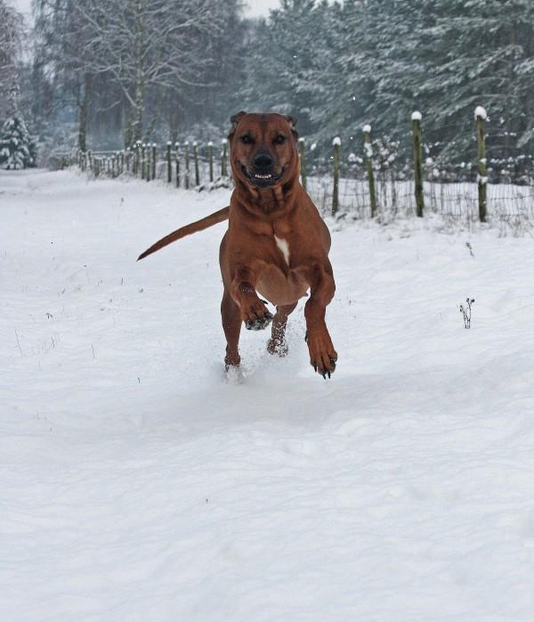ZOLA snow new year