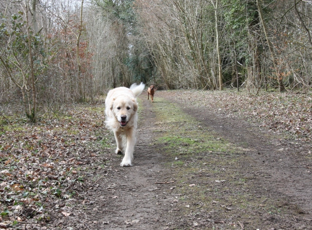 toffee and zola in the forest