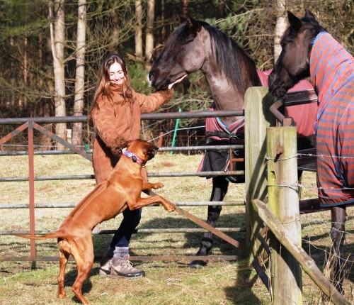 vikki zola horses 12