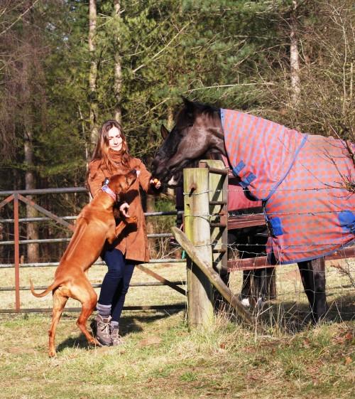 vikki zola horses 4