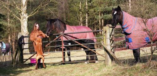 vikki zola horses 5