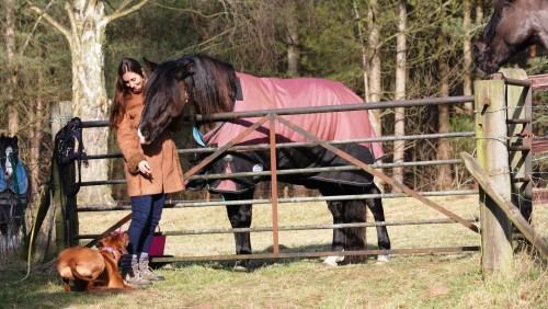 vikki zola horses 8
