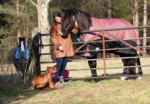 vikki zola horses 9