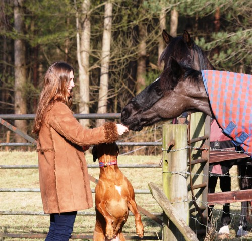 vikki zola horses
